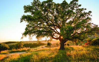 De oorsprong van kurk en de voordelen